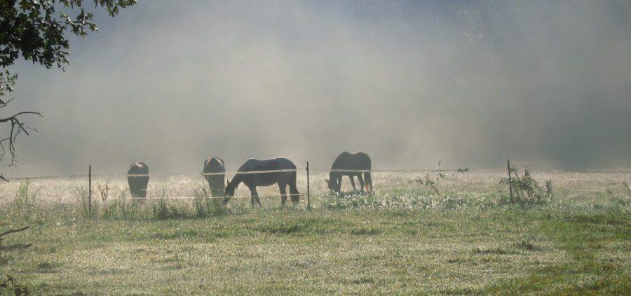 cropped-horses-1-076.jpg